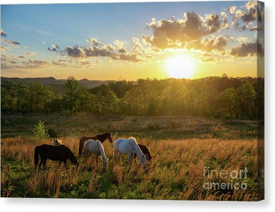 Open Spaces Canvas Print