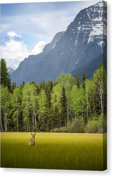 Open Spaces // Glacier National Park  Canvas Print