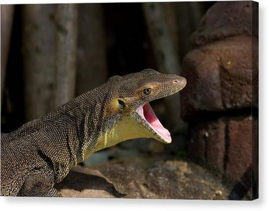 Lizards Canvas Print - Open Wide by Mike  Dawson