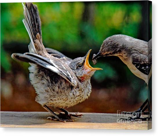 Mockingbird Canvas Print - Open Wide by Sue Melvin