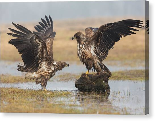 Marshes Canvas Print - Open Wings by Fabio Ferretto