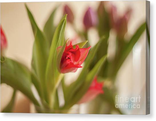 Canvas Print - Opening Up by Jo Jackson
