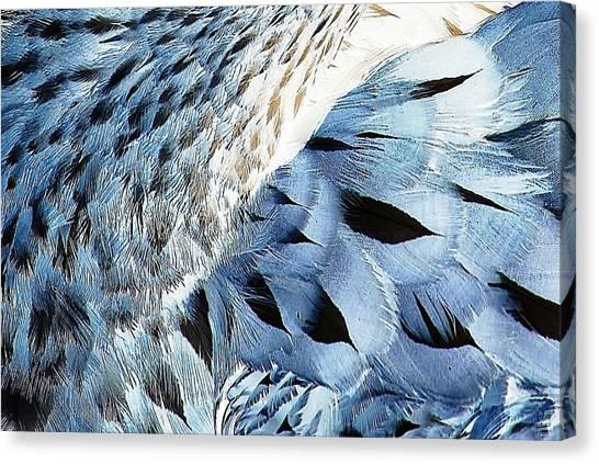 Blue Limpkin Canvas Print