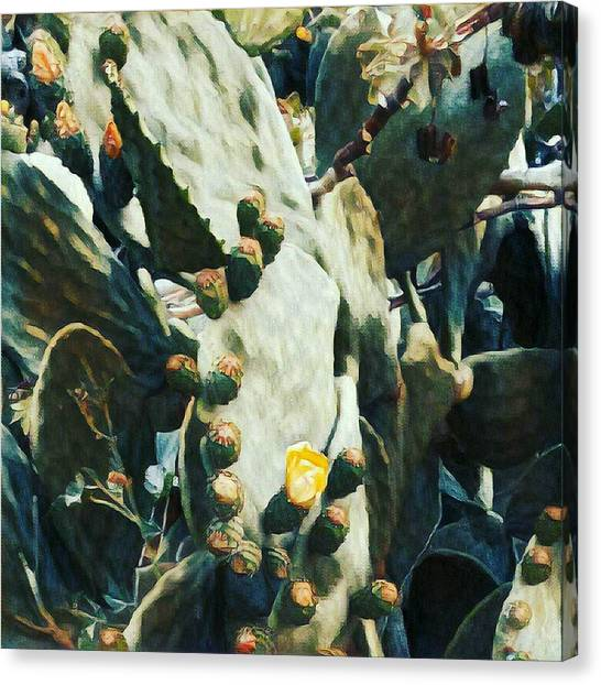 Opuntia Ficus Canvas Print