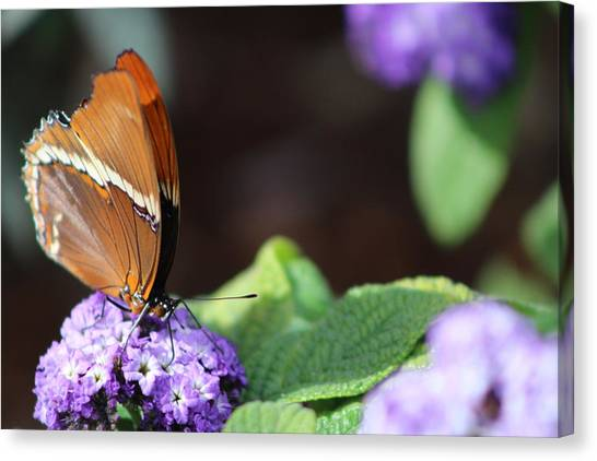 Orange And Brown Butterfly On Purple Canvas Print