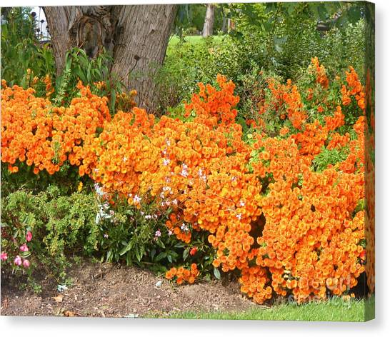 Orange Beauty Canvas Print by Deborah Selib-Haig DMacq