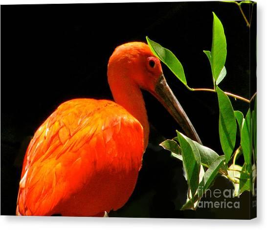 Orange Beauty Canvas Print by Debra     Vatalaro
