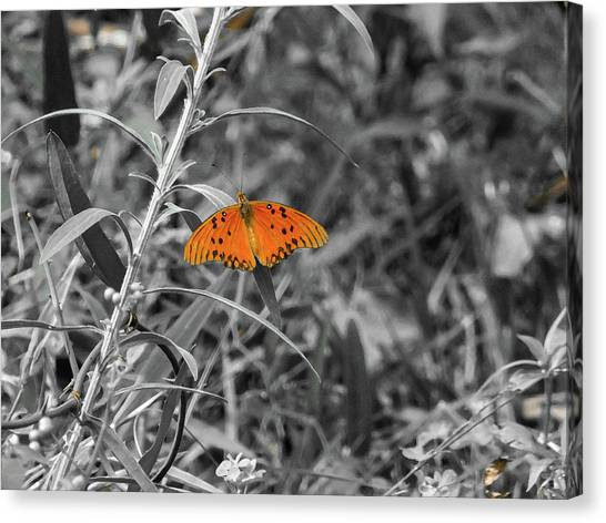 Orange Butterfly In Black And White Background Canvas Print