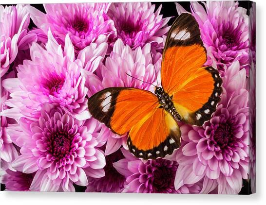 Pom-pom Canvas Print - Orange Butterfly On Pink Poms by Garry Gay