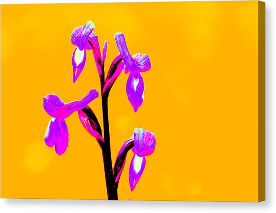 Orange Champagne Orchid Canvas Print