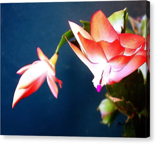 Canvas Print featuring the digital art Orange Christmas Cactus II by Deleas Kilgore