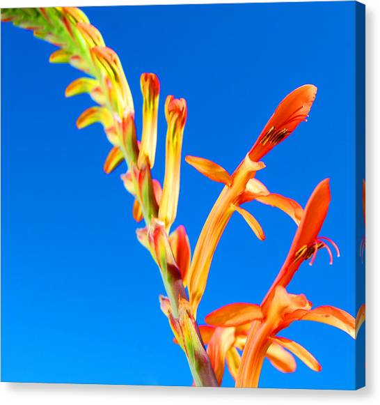 Orange Contrast Canvas Print by Jean Booth