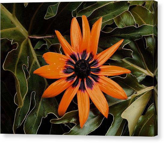Orange Demeanor  Abstract Canvas Print by Debbie May