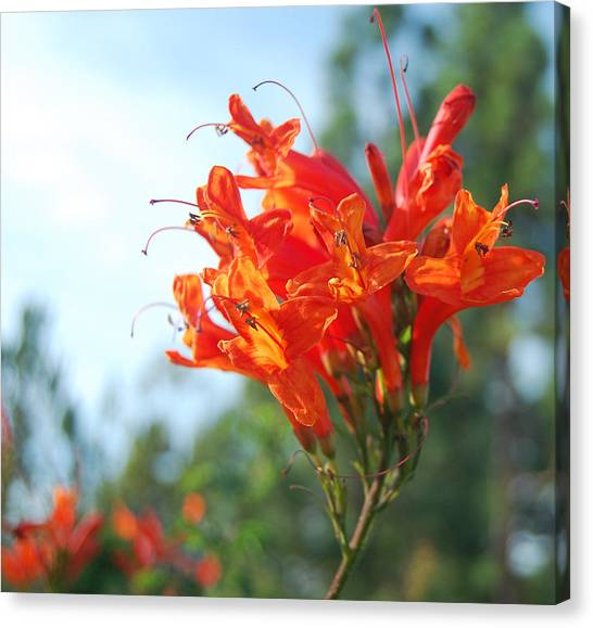 Orange Echo Canvas Print by Jean Booth