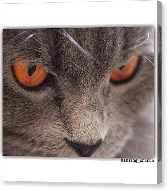 Trucks Canvas Print - Orange Feline Eyes My Persian Cat by Indian Truck Driver