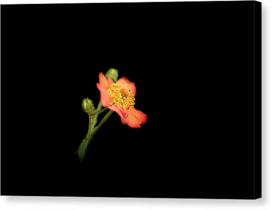 Orange Flowers In The Summer Canvas Print