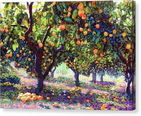 Citrus Canvas Print -  Orange Grove Of Citrus Fruit Trees by Jane Small