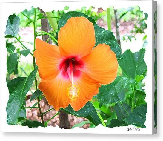 Orange Hibiscus Canvas Print by Judy  Waller