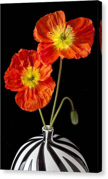 Perennial Canvas Print - Orange Iceland Poppies by Garry Gay