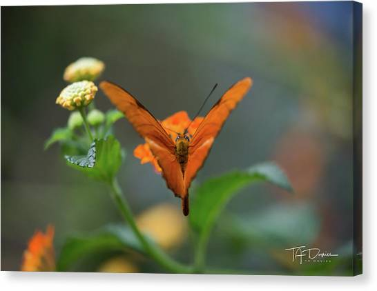 Orange Is The New Butterfly Canvas Print