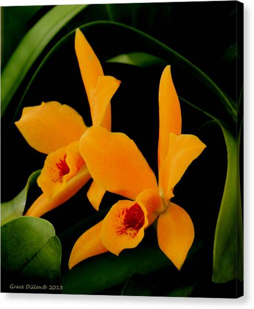 Orange Orchids Canvas Print