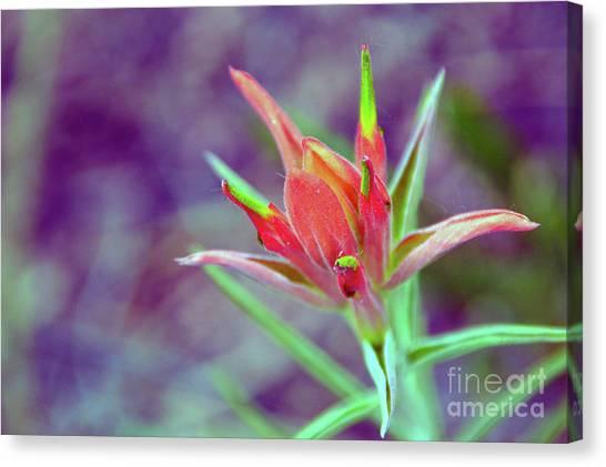 Orange Paintbrush Flower Canvas Print