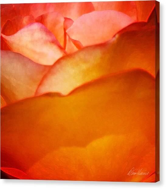 Orange Passion Canvas Print