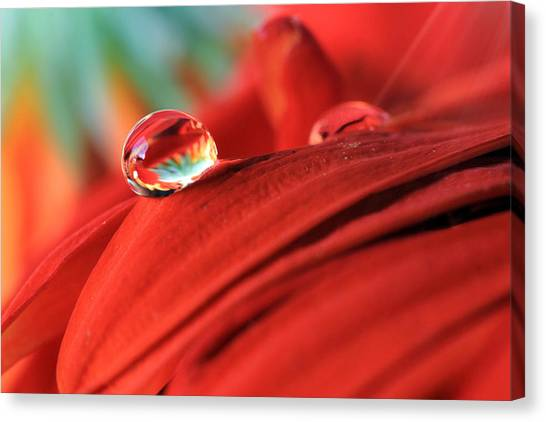 Orange Petals And Water Drops Canvas Print