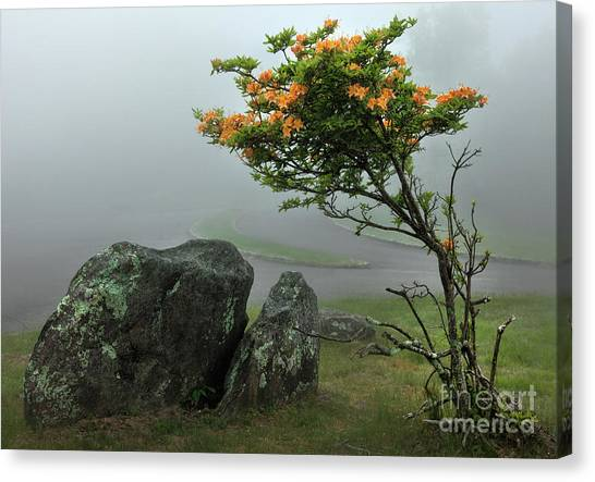 Orange Rhododendron In The Blue Ridge Canvas Print by Dan Carmichael