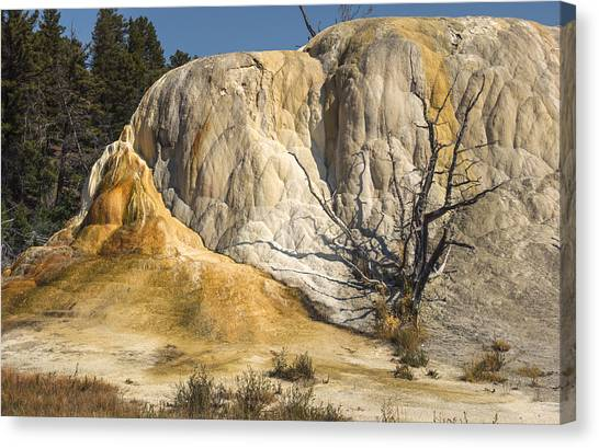 Orange Spring Mound Canvas Print by Loree Johnson