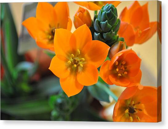 Orange Star Canvas Print
