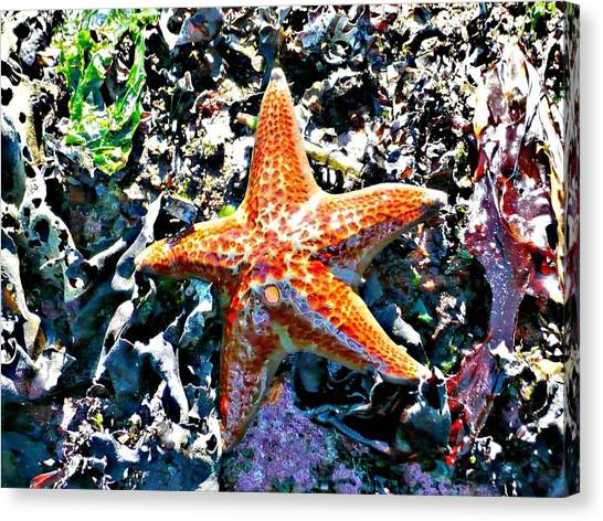 Orange Starfish Canvas Print