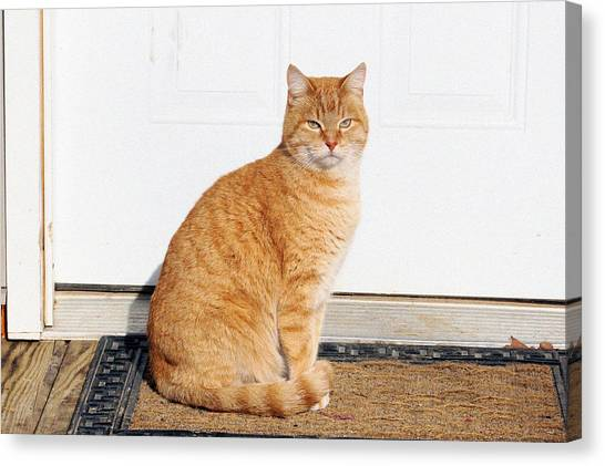 Orange Tabby Cat Canvas Print