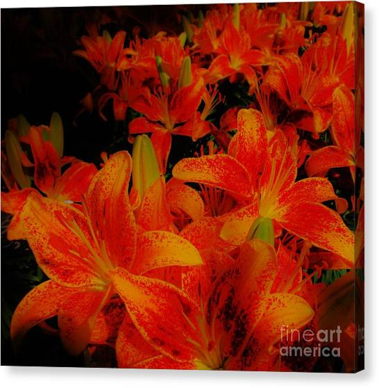 Spicey Tiger Lilies Canvas Print