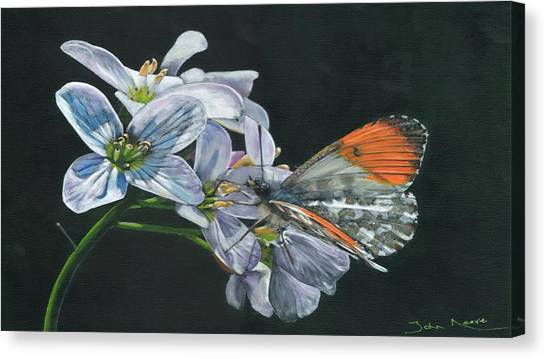 Orange Tip  Canvas Print