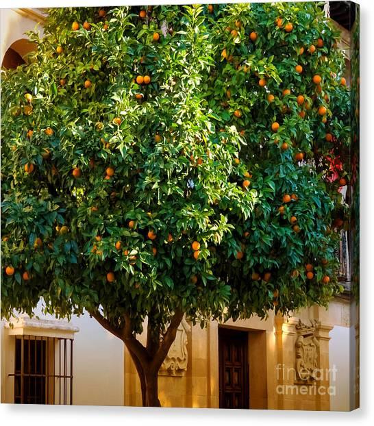 Orange Tree Canvas Print - Orange Tree Spain by Lutz Baar