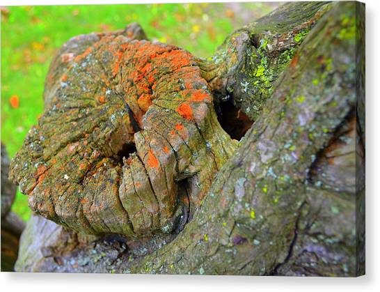 Orange Tree Stump Canvas Print