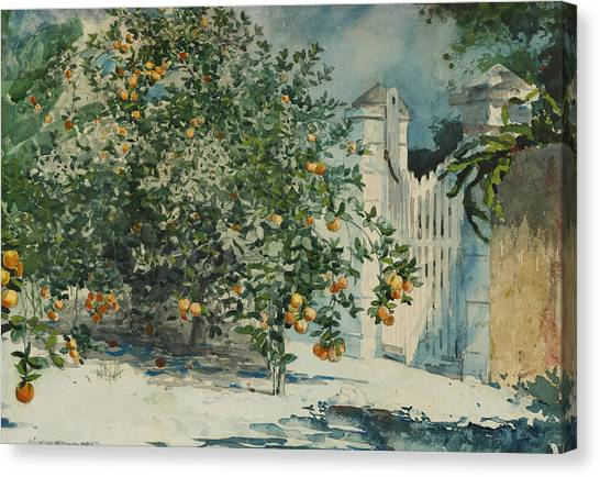 Fruit Trees Canvas Print - Orange Trees And Gate by Winslow Homer