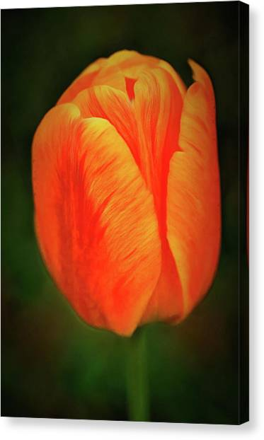Canvas Print featuring the photograph Orange Tulip Painting Neo Rembrandt Style by Matthias Hauser
