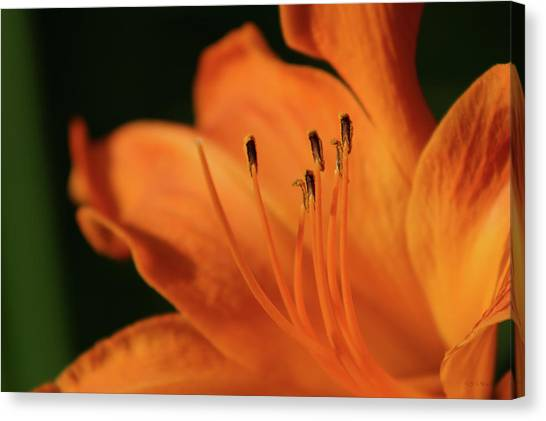 Orange Wave 3096 H_2 Canvas Print