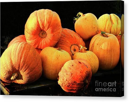 Orange Yellow Pumpkins Canvas Print