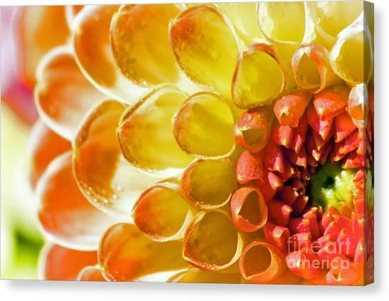 Oranges And Lemons Canvas Print