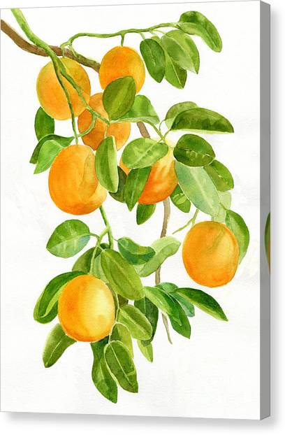 Fruit Trees Canvas Print - Oranges On A Branch by Sharon Freeman