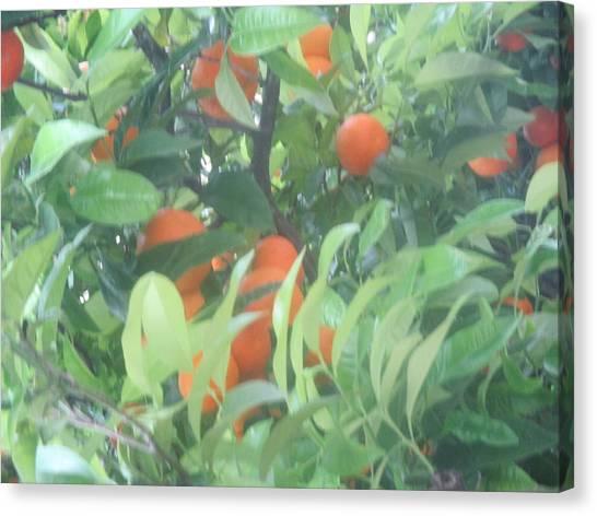 Orange Tree Canvas Print - Oranges On The Tree by Anamarija Marinovic