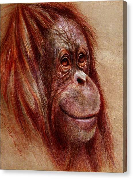 Orangutans Canvas Print - Orangutan Smiling - Sketch  by Svetlana Ledneva-Schukina