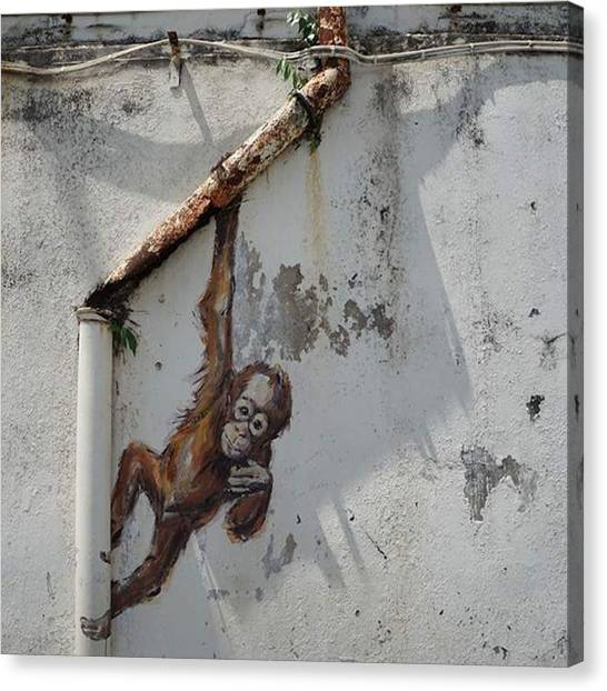 Orangutans Canvas Print - #orangutan #street #art By by Sy Smith