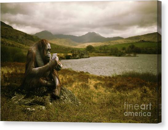 Orangutan Canvas Print - Orangutan With Smart Phone by Amanda Elwell