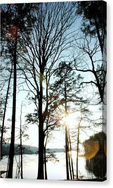 Orbs In The Trees Canvas Print
