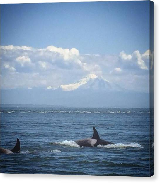 Orcas Canvas Print - Orca Game Too Strong🐋🐬🐳 + That by Erika Johnson