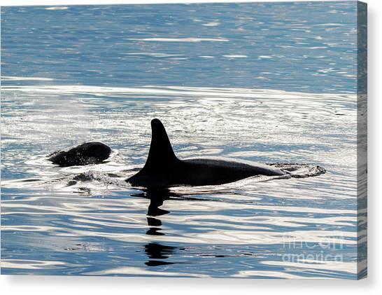 Orcas Canvas Print - Orca Pair by Mike Dawson